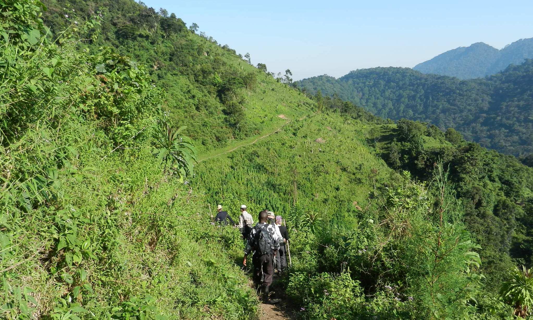 Gorilla Trekking, Rwanda, Oeganda
