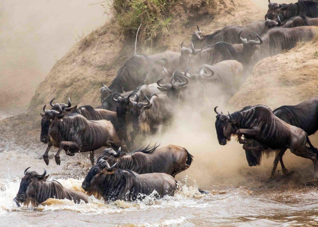 kenia grote migratie