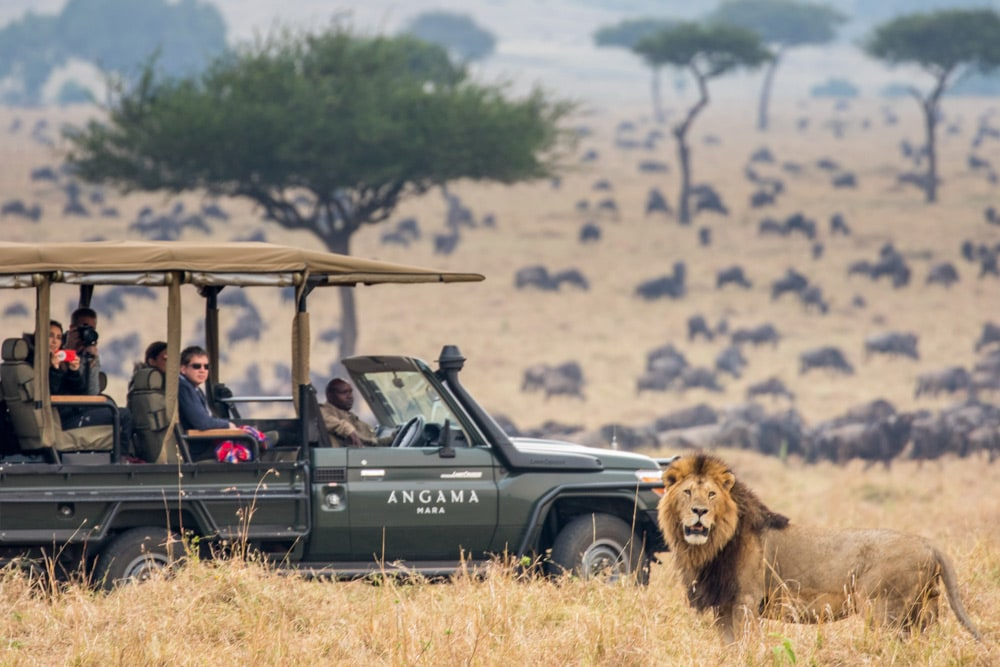 kenia game drive leeuw