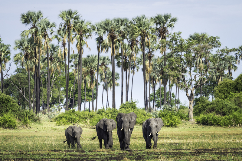 botswana olifanten