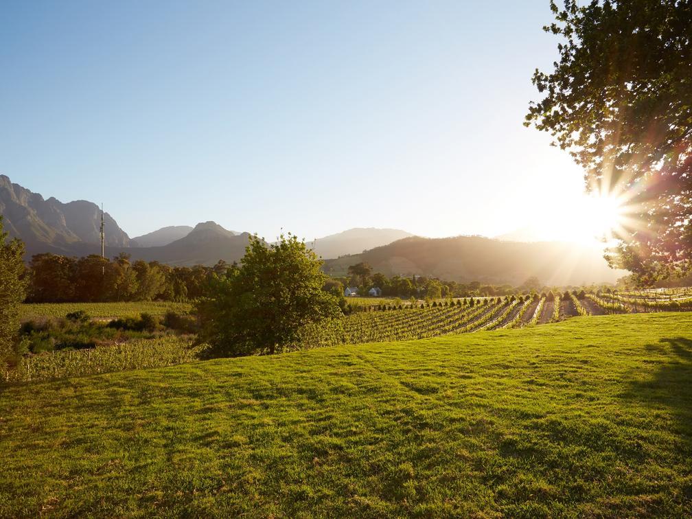 Wijnlanden, natuur