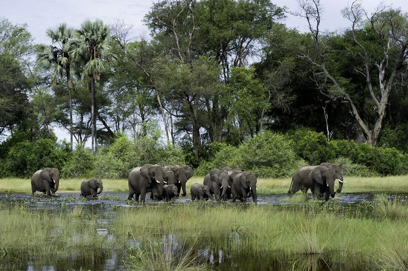 botswana olifanten kudde