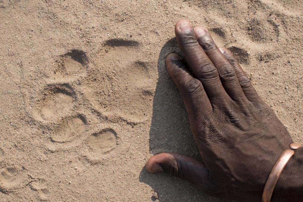sporen zimbabwe wandelsafari