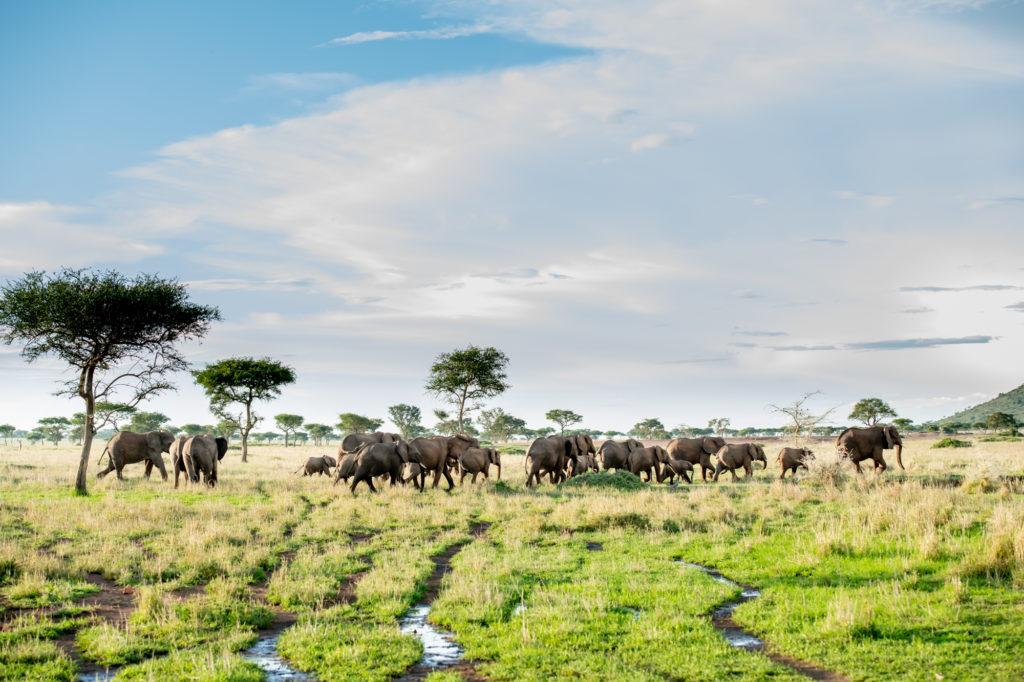 Grumeti Olifanten
