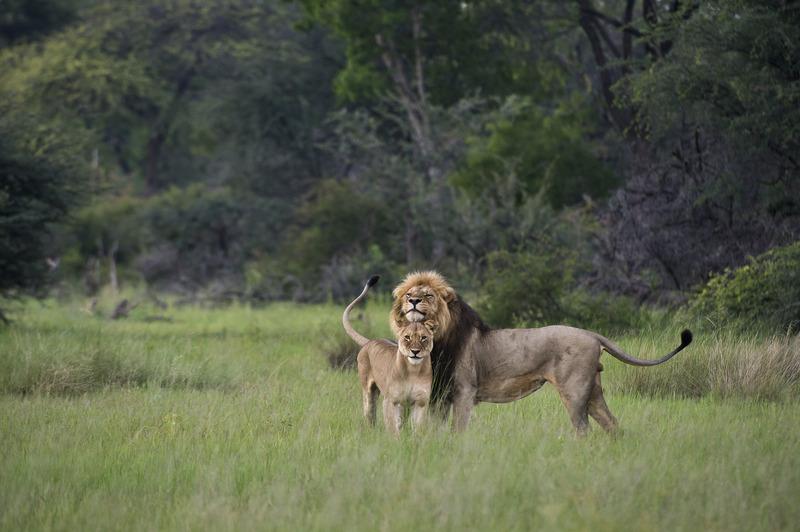 leeuwen zimbabwe
