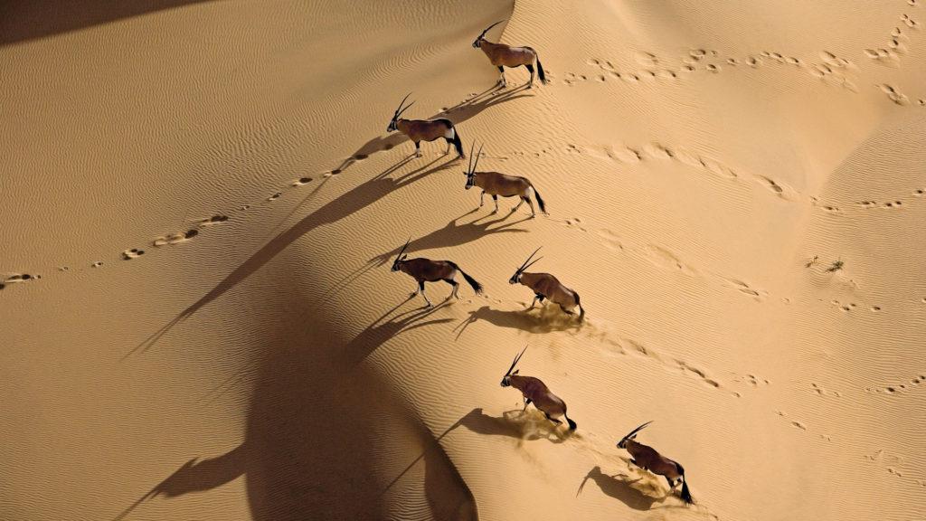 oryx namibië