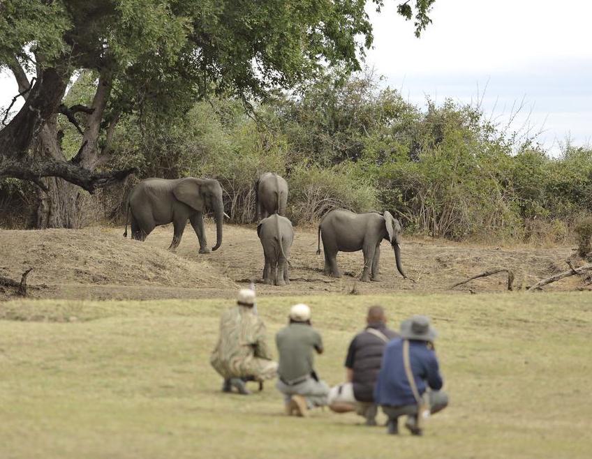 olifanten zambia