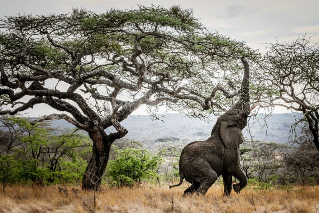 Olifant Mwiba Wildlife Reserve