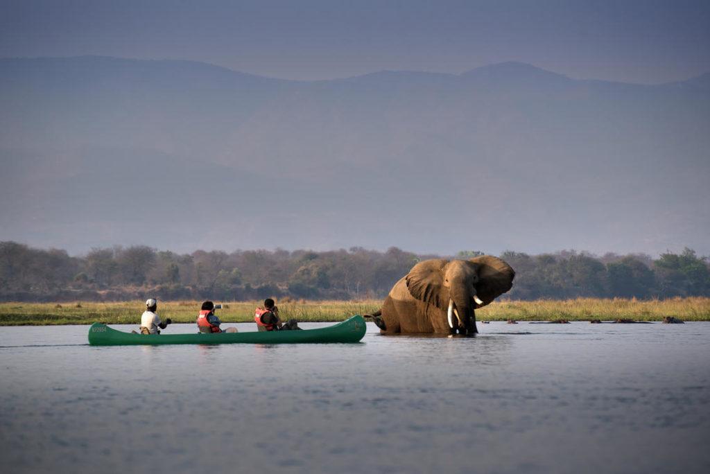 bootsafari zambezi zimbabwe