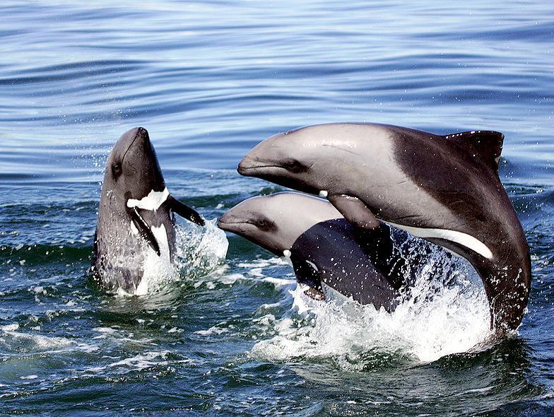 swakopmund-dolfijn