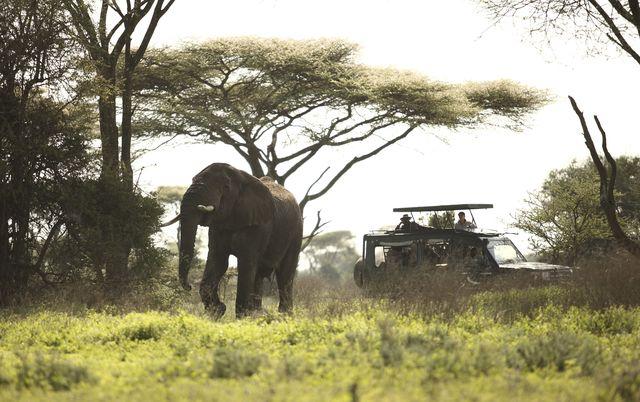 Serengeti Olifanten Game Drive
