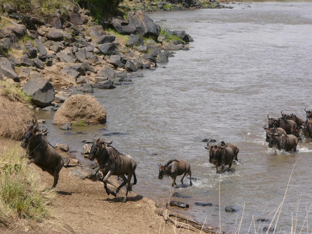 Serengeti Oversteek