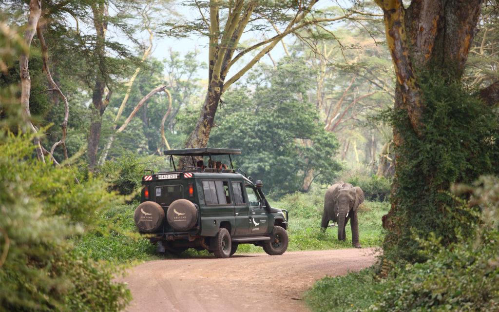 Ngorongoro Game Drive