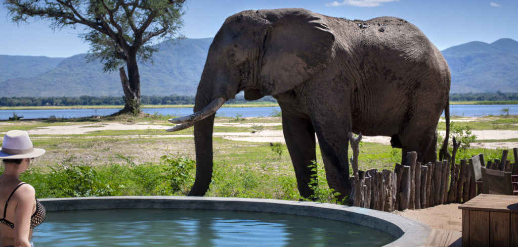 Mana Pools National Park Olifant Zwembad