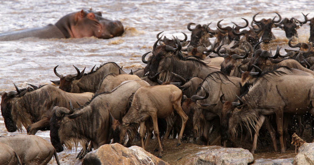 grote migratie tanzania