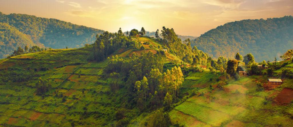 bwindi-impenetrable-forest-berg