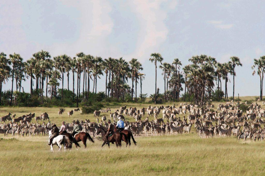 paardrijden zebra migratie