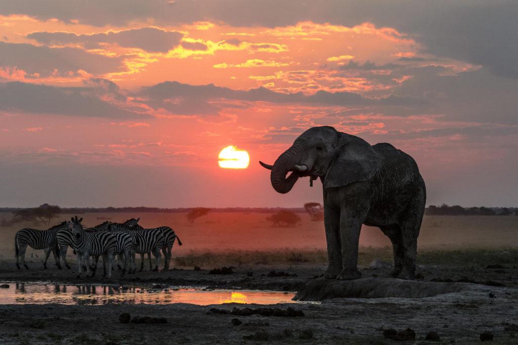 Nxai pan olifant