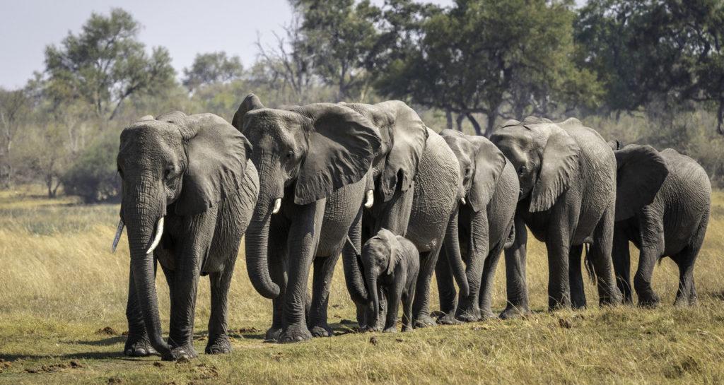 olifanten linyanti zimbabwe
