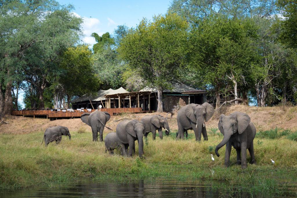 Mana Pools National Park Olifanten bij Lodge