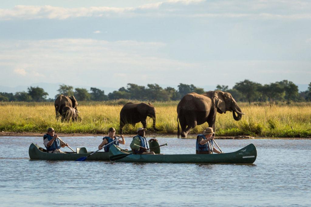 Mana Pools National Park Kanotocht Olifanten