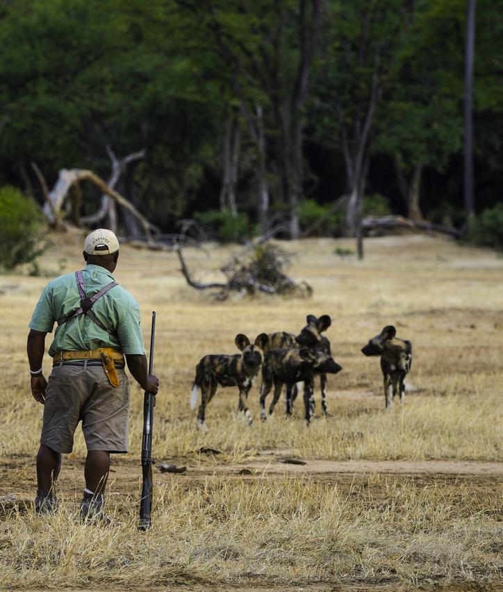 Mana Pools National Park wandelsafari wilde hond