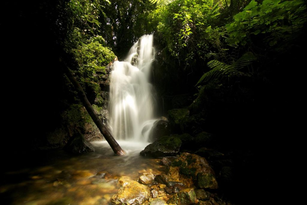 bwindi-impenetrable-forest-waterval
