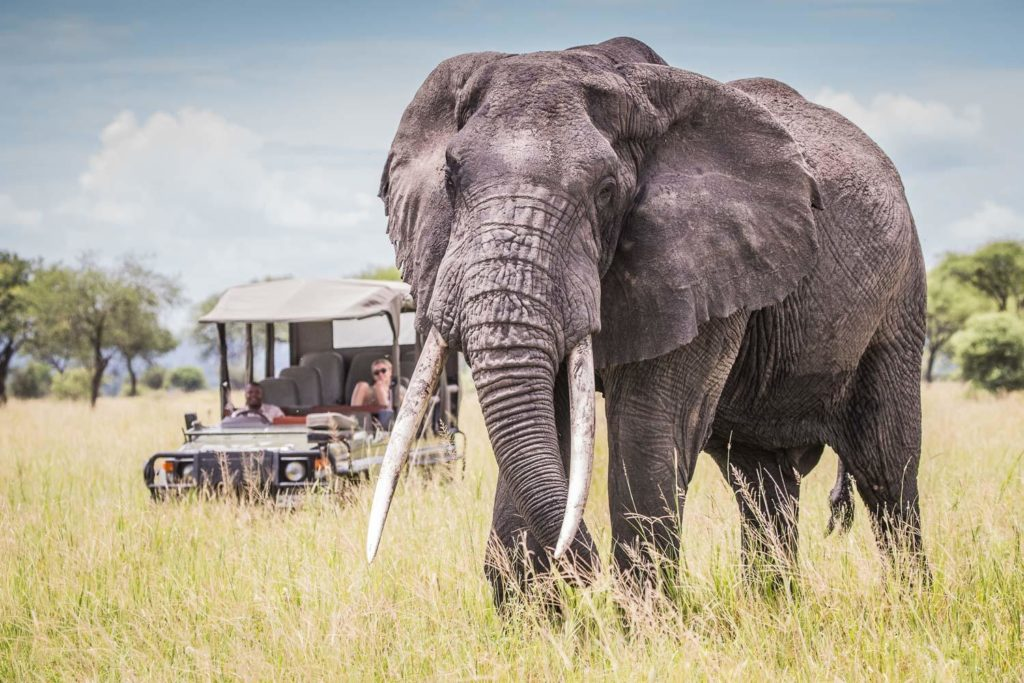 olifant tanzania