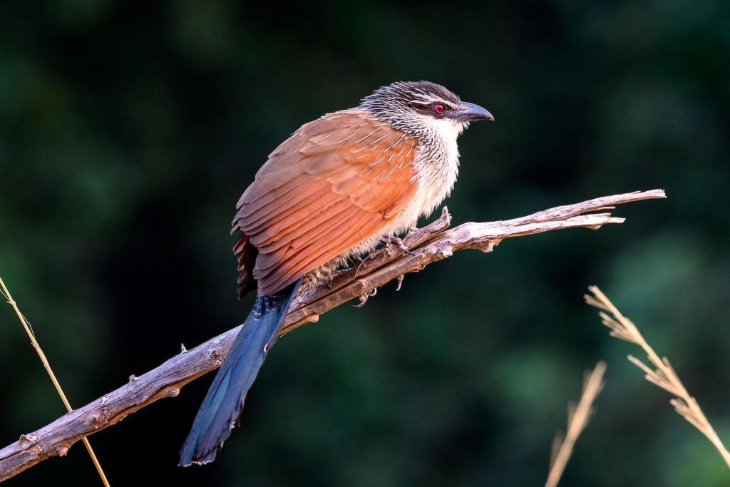 Mana Pools National Park Birdlife