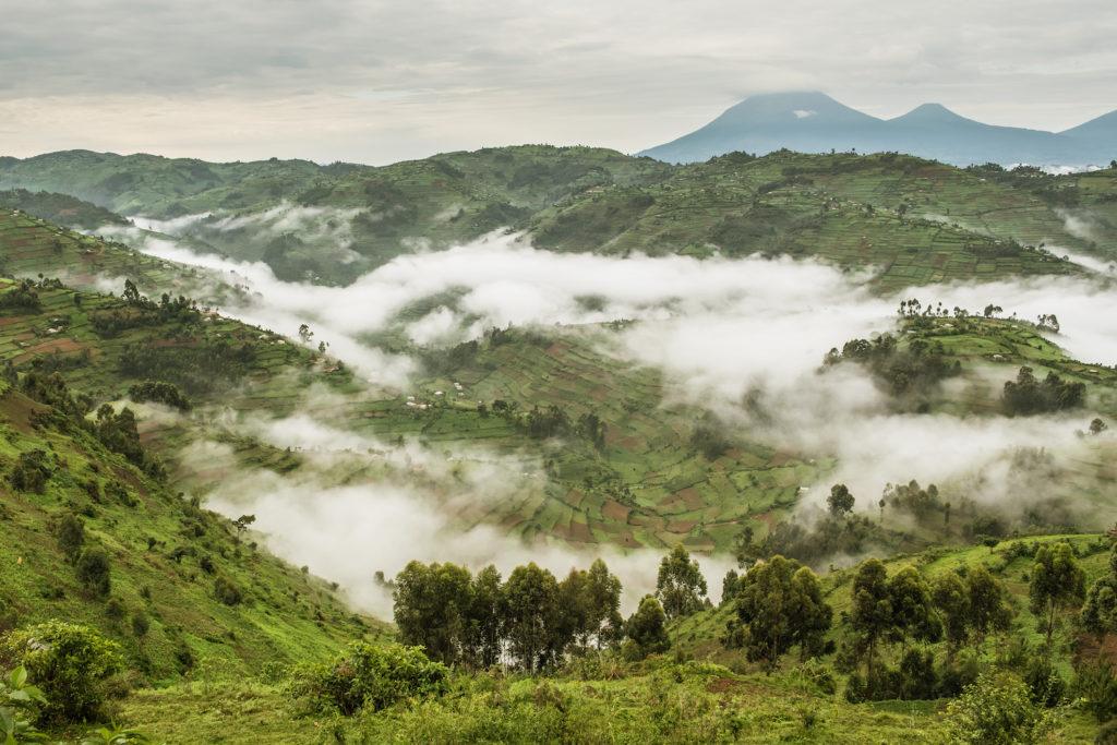 bwindi-impenetrable-forest-heuvels