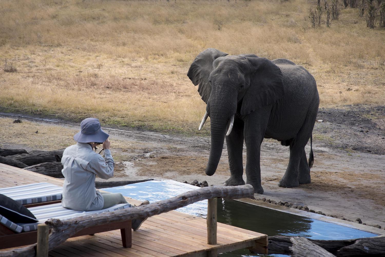olifant bij lodge zimbabwe