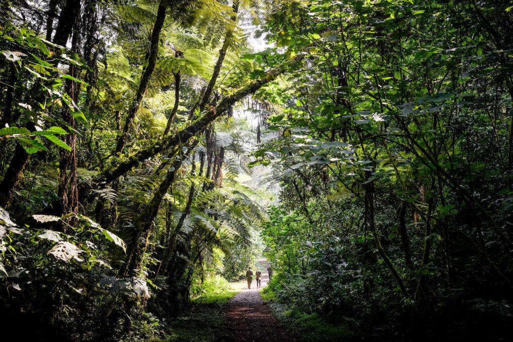 bwindi-impenetrable-forest-hike-2