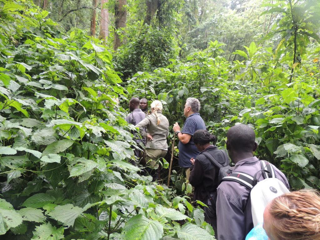 bwindi-impenetrable-forest-gorilla-trekking